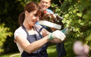 Vrtna opravila - Delo na vrtu