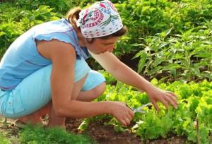 Vrtna opravila - Delu na vrtu