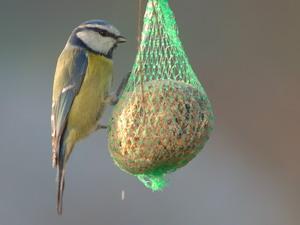 ptičja piča - mladi vrtnarji