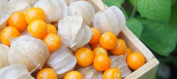 inkovske jagode